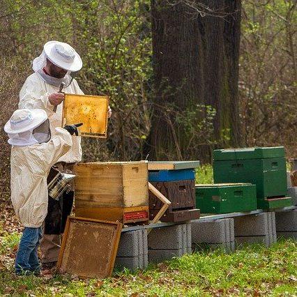 beekeeper-4426003_640
