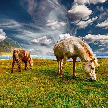 horses-2427513_640